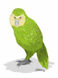 Kakapo by GKoch