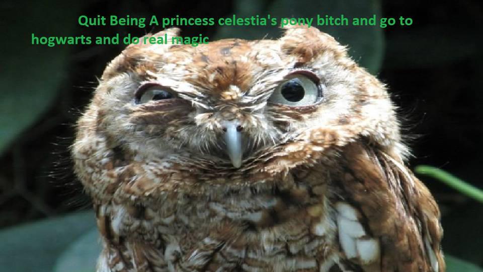 hogwarts owl hates mlp fim by irishwolf8504