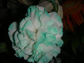 A Blue Flower by ElisabethvonAustria