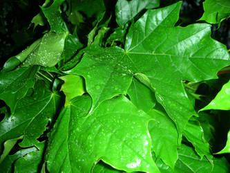 Leaves by ElisabethvonAustria