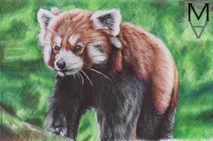 Red Panda by sarah-mca-art