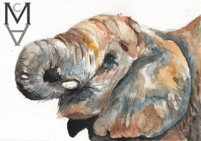 Elephant Watercolour by sarah-mca-art