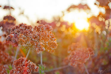 Golden Hour in the Weeds by SpiritedFang
