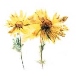 flowers by jeezoosquintana