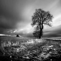 Lonesome Tree - II by Loran31