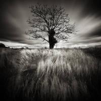 Cold Tree by Loran31