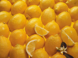 lemon by babakch2