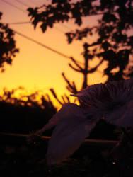 Orange Sky by claytonh