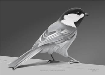 Bird by CarinaReis