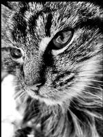 kitty by deviantnameunknown