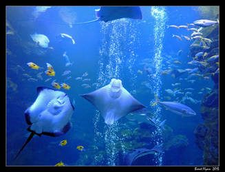 Undersea Odyssey by DarthIndy