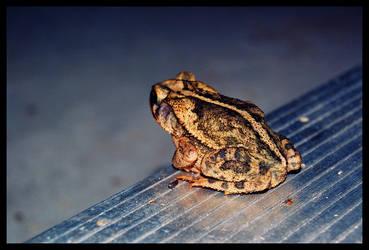 Saturday night frog by LeGreg
