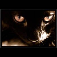 Those eyes by LeGreg