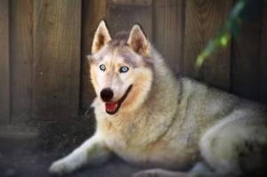 One arm white wolf by LeGreg