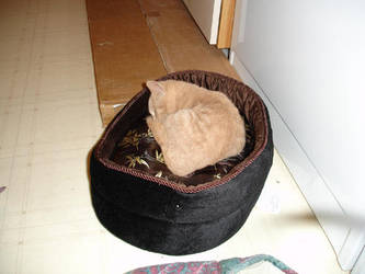 Takenouchi Sleeping by aahawley