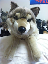FAO Schwarz Wolf plush (Ben) by Wolfywillow