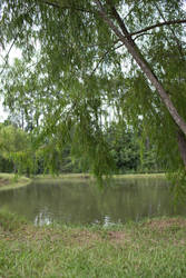 pond stock 3 by VioletBreezeStock