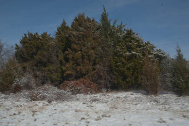 snow tree stock by VioletBreezeStock