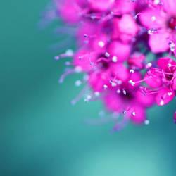 Petites fleurs by AmandineRopars