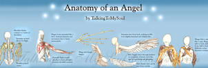 anatomy of an angel by TalkingToMySoul