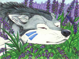 ACEO: Lounging in the Lavender by Sessko