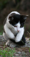 Cat Stock 02 by Malleni-Stock