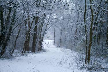 Snow stock 32 by Malleni-Stock