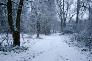 Snow stock 43 by Malleni-Stock