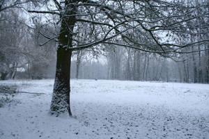 Snow stock 54 by Malleni-Stock