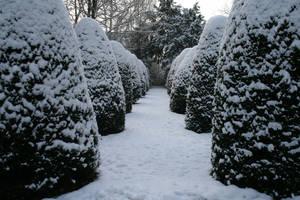 Snow stock 70 by Malleni-Stock