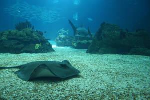 Aquarium Stock 18 by Malleni-Stock