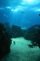 Aquarium Stock 23 by Malleni-Stock