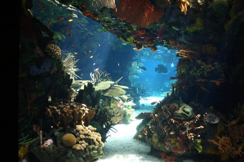 Aquarium Stock 28 by Malleni-Stock