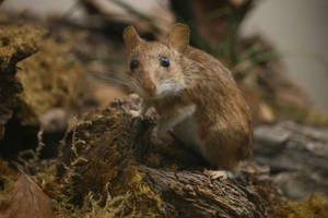 Mouse Stock 03 by Malleni-Stock