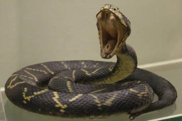 Snake Stock 05 by Malleni-Stock