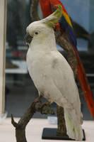 Bird Stock 23 by Malleni-Stock