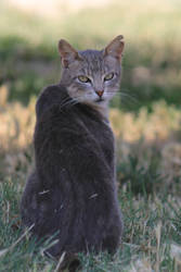 Cat Stock 22 by Malleni-Stock