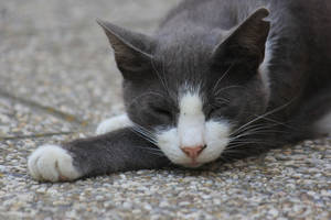Cat Stock 25 by Malleni-Stock