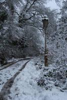 Narnia Stock 03 by Malleni-Stock
