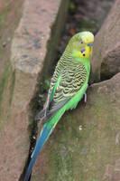 Bird Stock 38 by Malleni-Stock