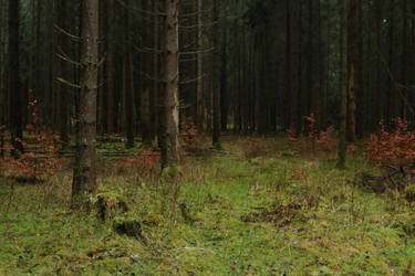 Forest Stock 040 by Malleni-Stock