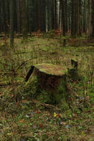 Forest Stock 038 by Malleni-Stock