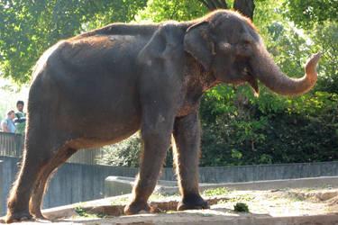 Elephant Stock 07 by Malleni-Stock