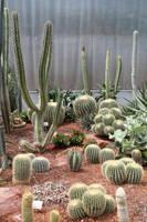 Cactus Stock 02 by Malleni-Stock
