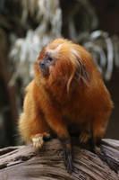 Monkey Stock 03 by Malleni-Stock