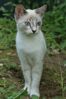 Cat Stock 059 by Malleni-Stock