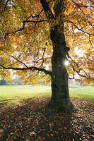 Autumn Stock 13 by Malleni-Stock