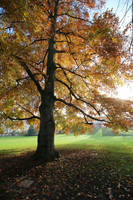 Autumn Stock 11 by Malleni-Stock