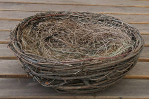 Nest Stock 01 by Malleni-Stock