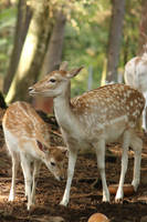 Deer Stock 35 by Malleni-Stock